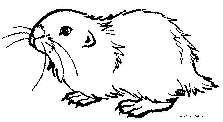 Free Realistic Guinea Pig Coloring Pages printable