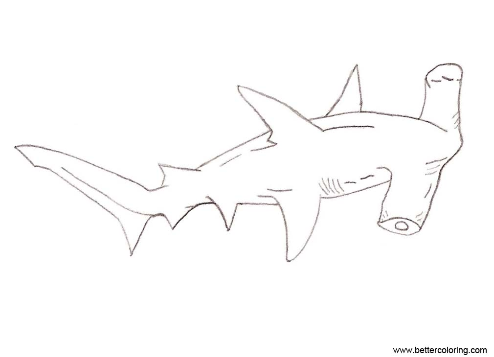 Free Shark Week Coloring Pages Hammerhead by jaina anne printable