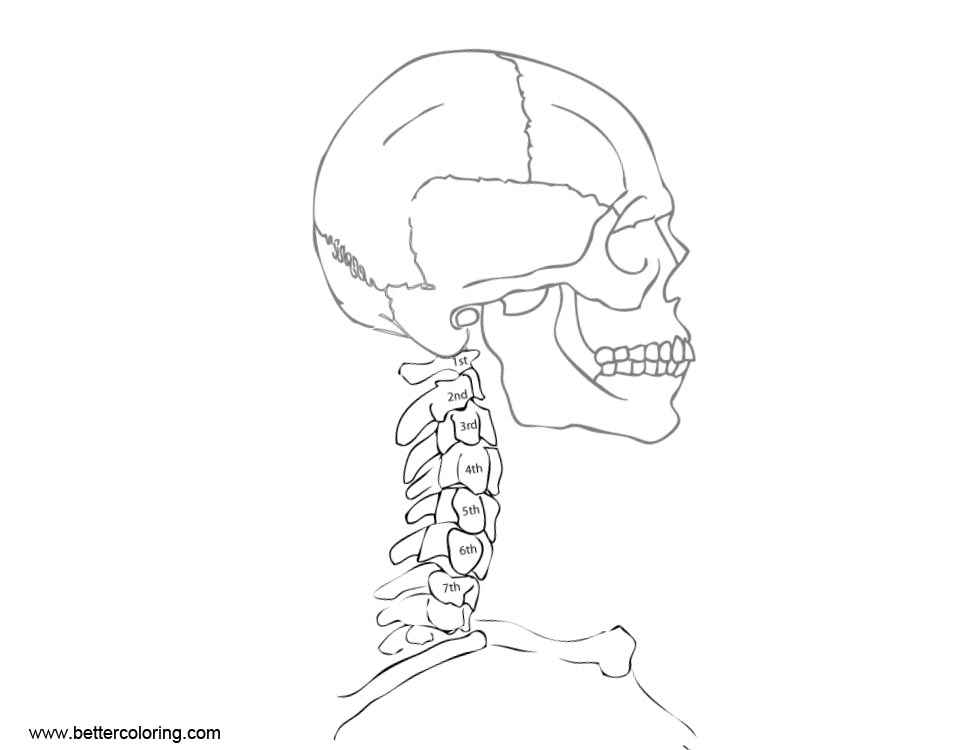 Simple Anatomy Coloring Pages Line Art Free Printable
