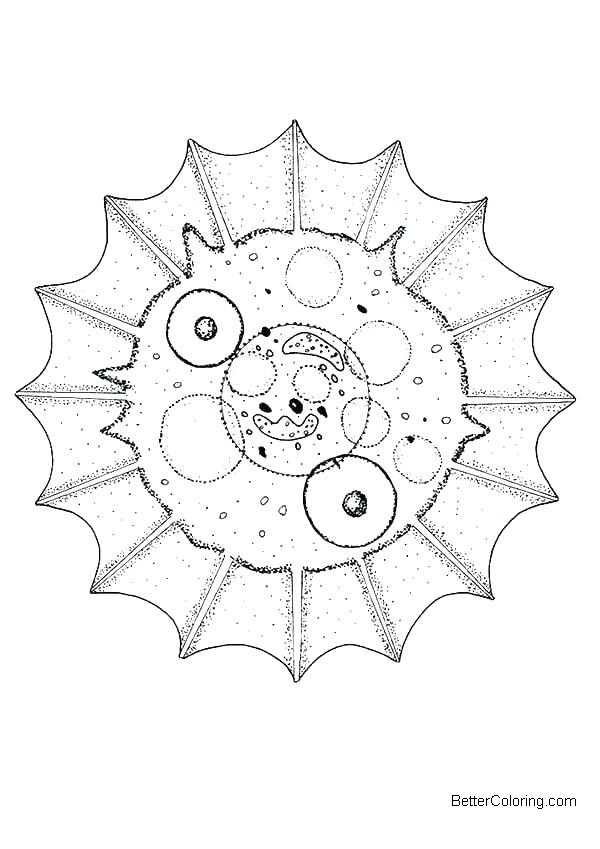 Free Animal Cell Coloring Pages Diagram Photograph printable