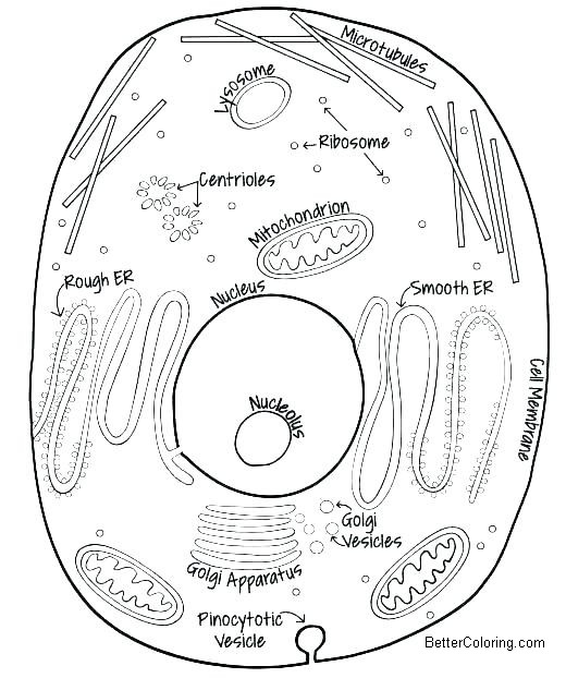 animal cell coloring pages hand drawing