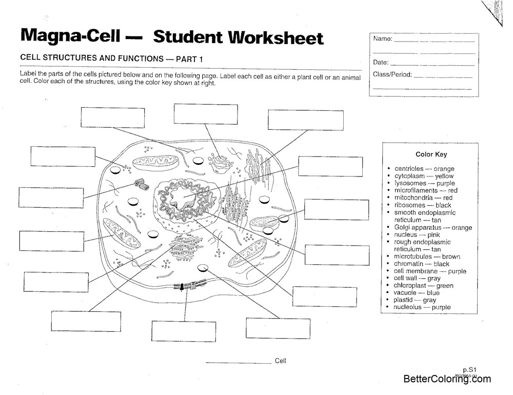 Free Animal Cell Coloring Pages Magna Cell Structures and Functions printable