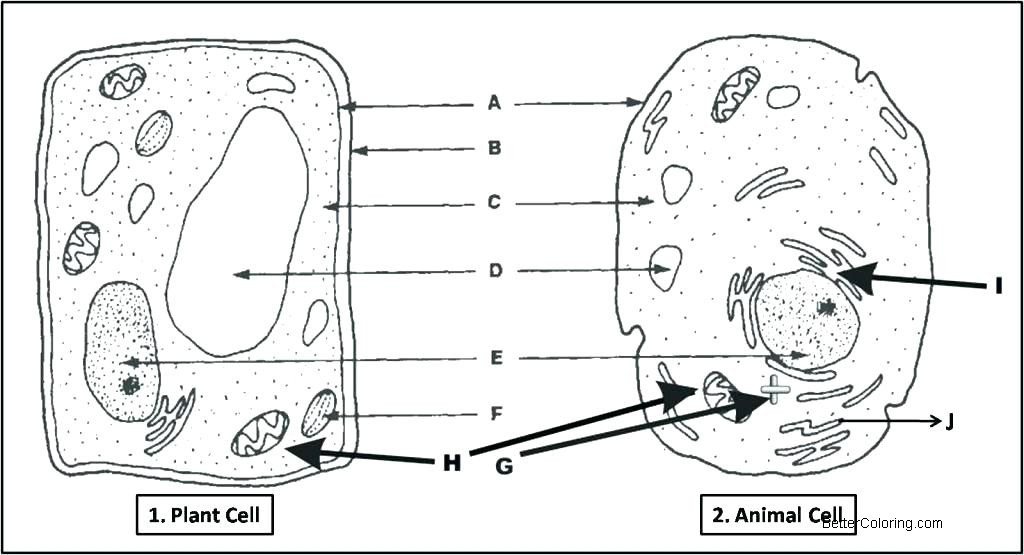 animal cell and plant cell coloring pages