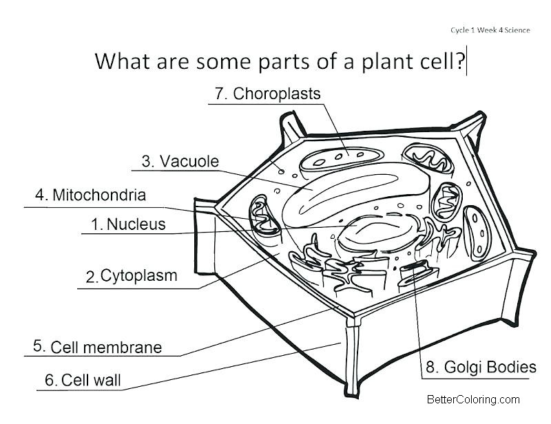 parts of plant cell coloring pages