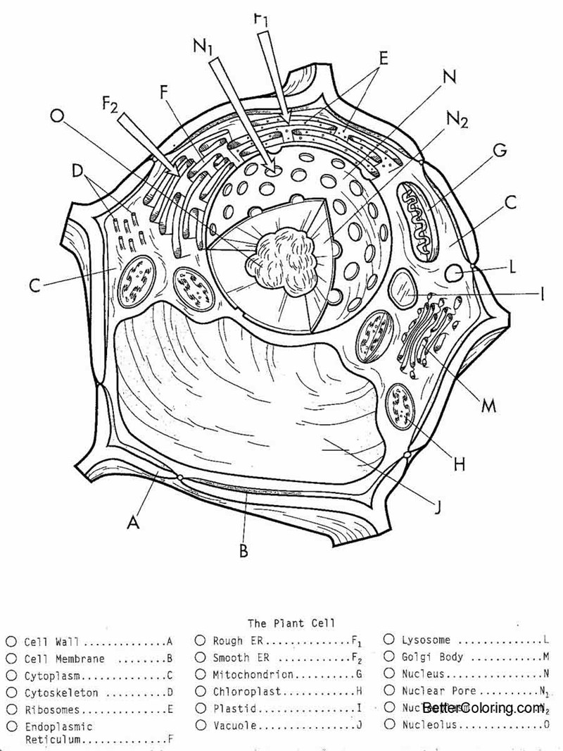 plant cell coloring pages black and white