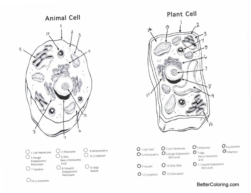 Free Plant and Animal Cell Coloring Pages printable