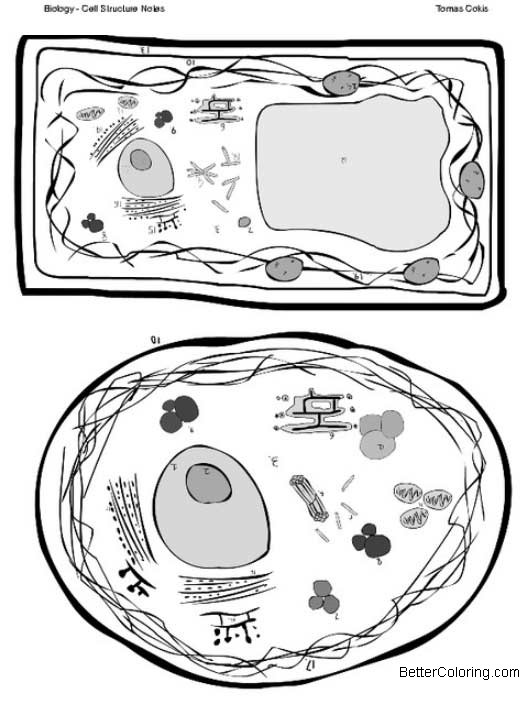 Free Plant and Animal Cells Coloring Pages Cell Structures Notes printable