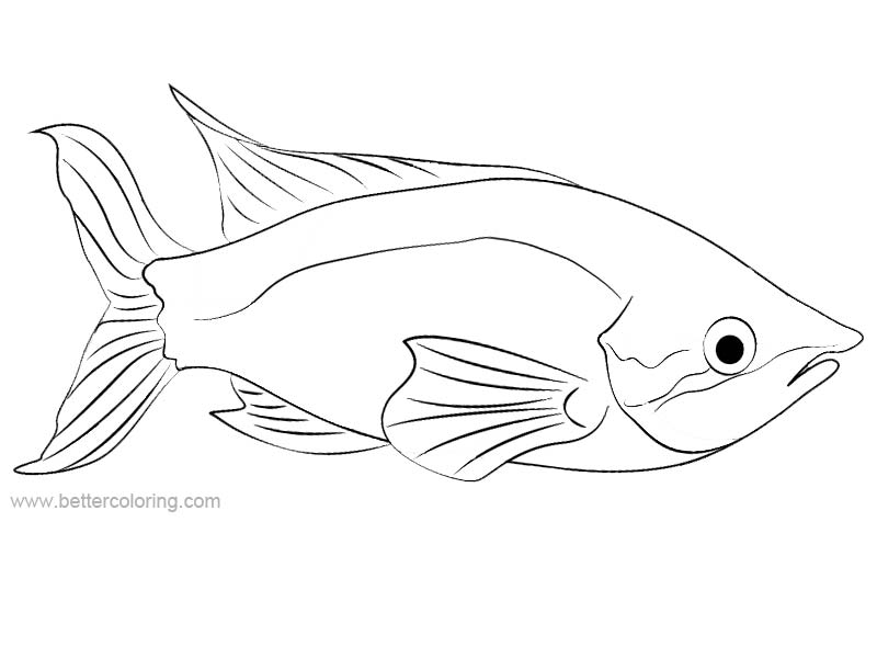 Free Rainbow Fish Coloring Pages Linear Pictures printable