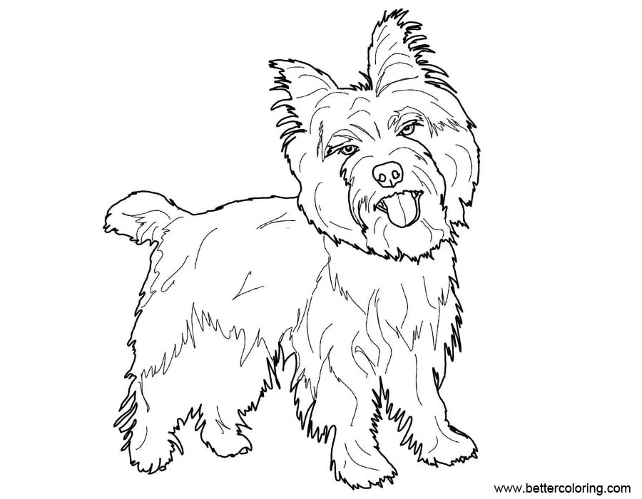 Free Yorkie Coloring Pages Sketch printable