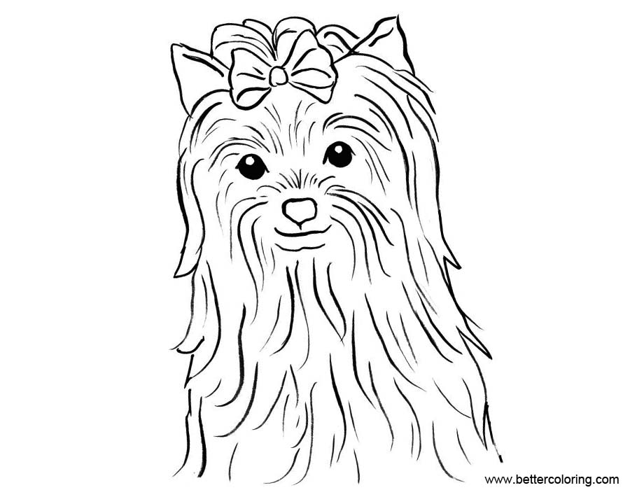 yorkshire coloring pages | Yorkie Puppy Coloring Pages - Free Printable Coloring Pages