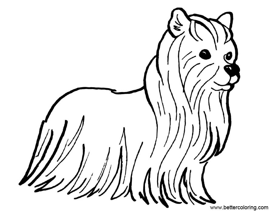 Free Yorkshire Terrier Coloring Pages printable