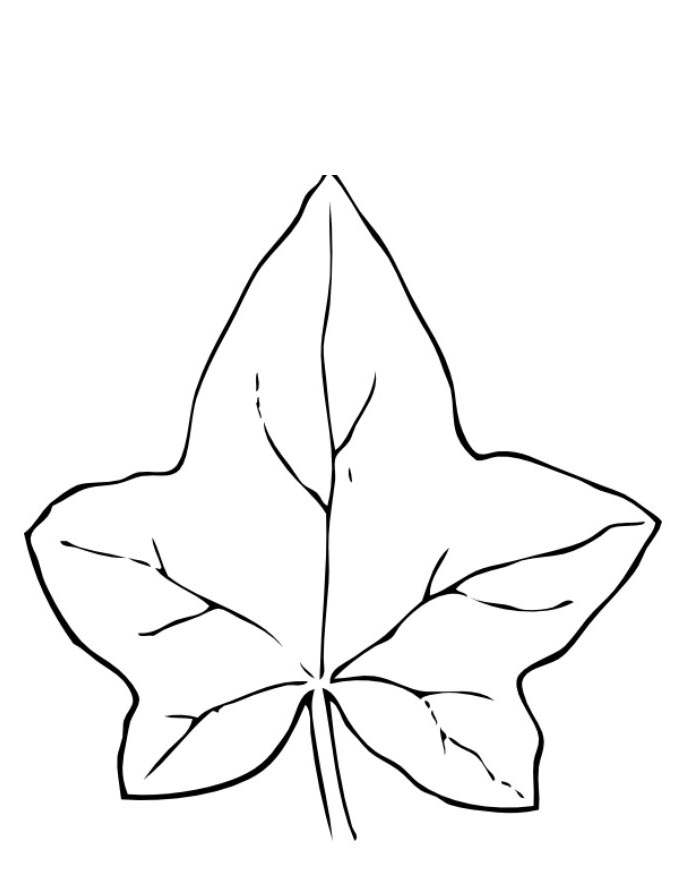 Free Acorn Coloring Pages Acorn Oak Leaves printable