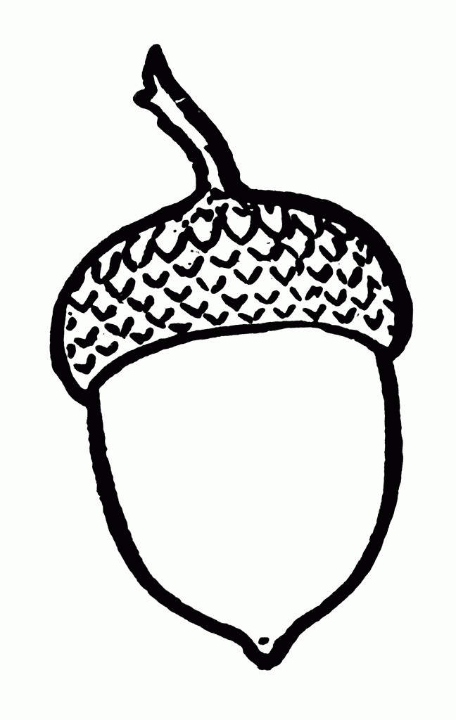 Acorn Coloring Pages Coloring Sheets