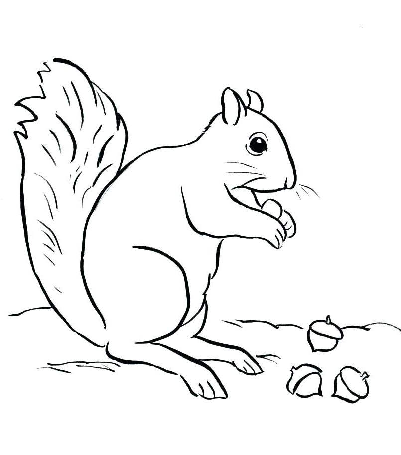 Free Acorn Coloring Pages and Squirrel printable