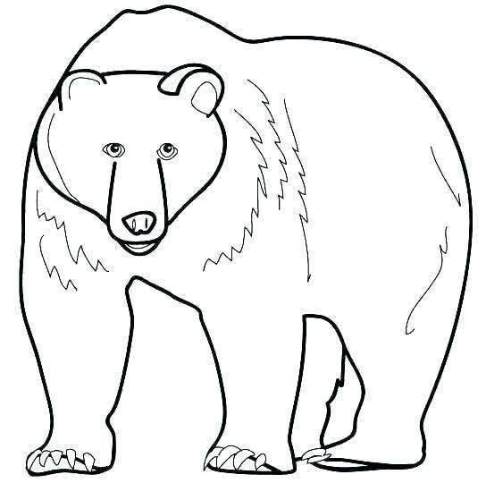 photograph relating to Brown Bear Brown Bear Printable Book named Reasonable Brown Undertake Brown Undergo Coloring Web pages - Absolutely free