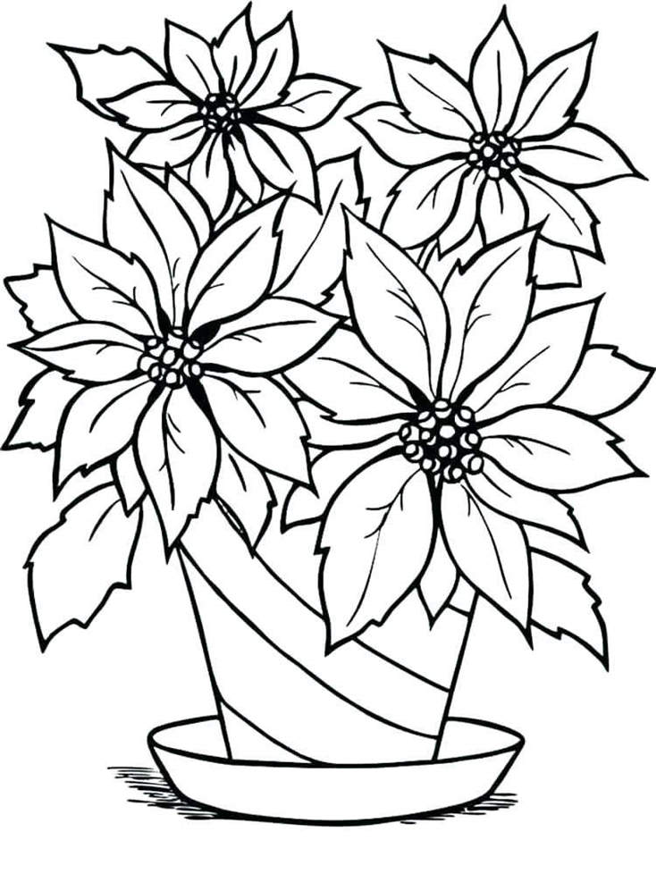 Poinsettia Coloring Pages Printable Drawing Pictures In Flower