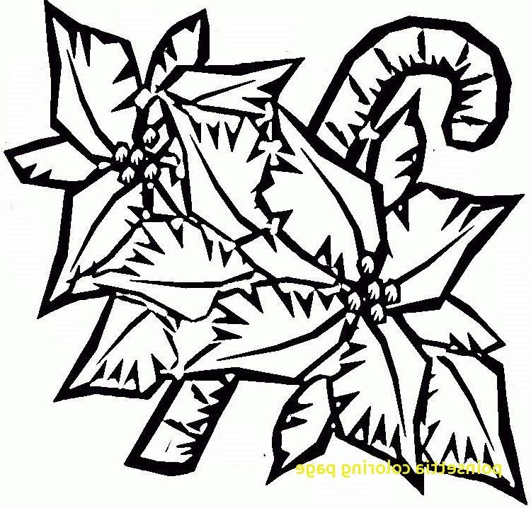 Poinsettia Coloring Pages For Preschool 160 Free Printable