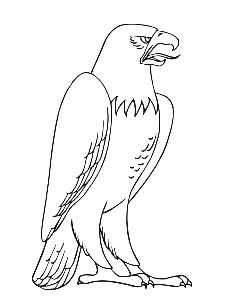 Free Birds Coloring Pages Inside Colouring Coloring Book printable