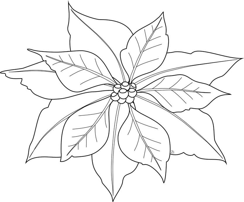 How To Draw Mistletoe Coloring Pages 484