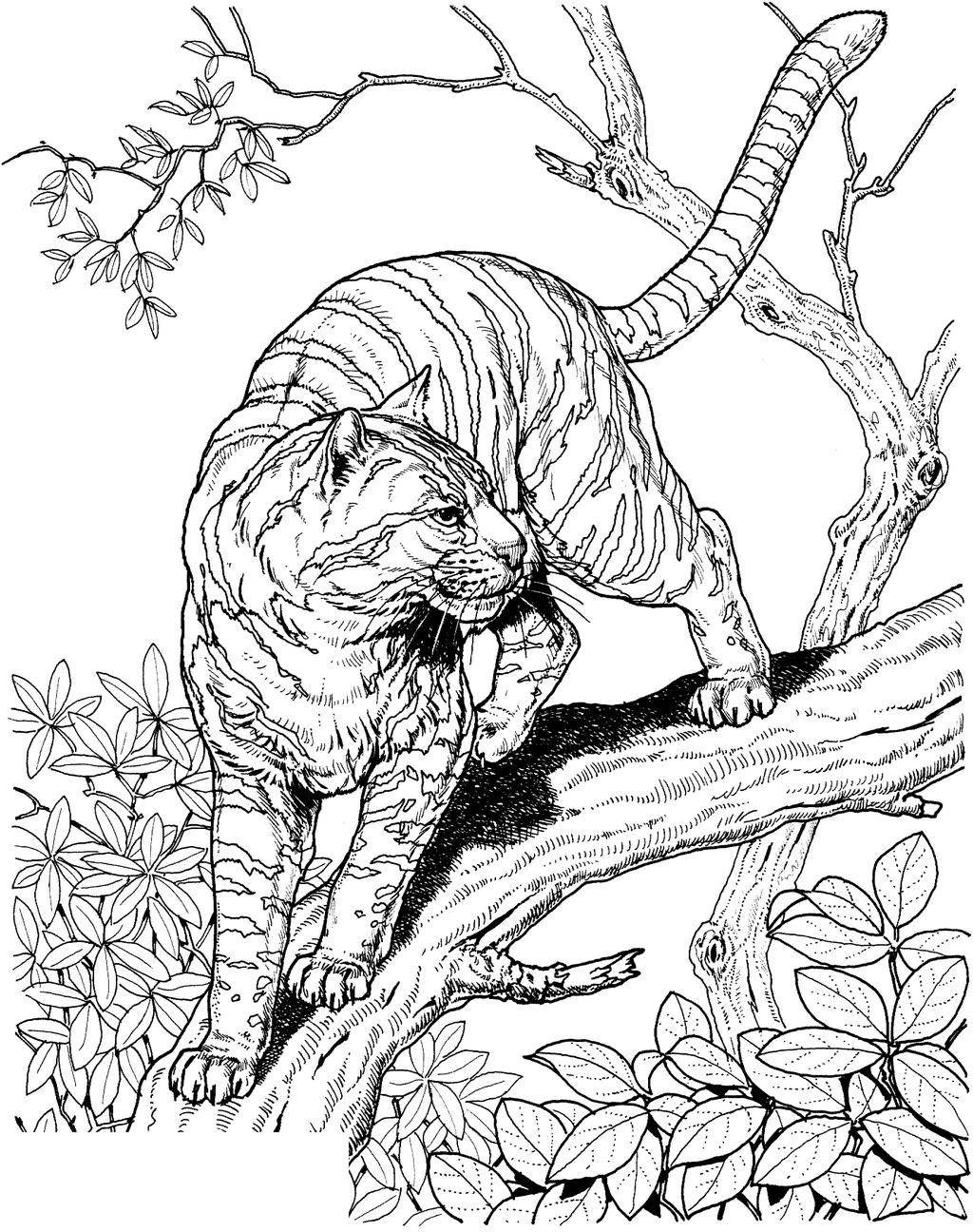 Tiger Coloring Pages Ausmalbilder Pinterest Hand Drawing ...