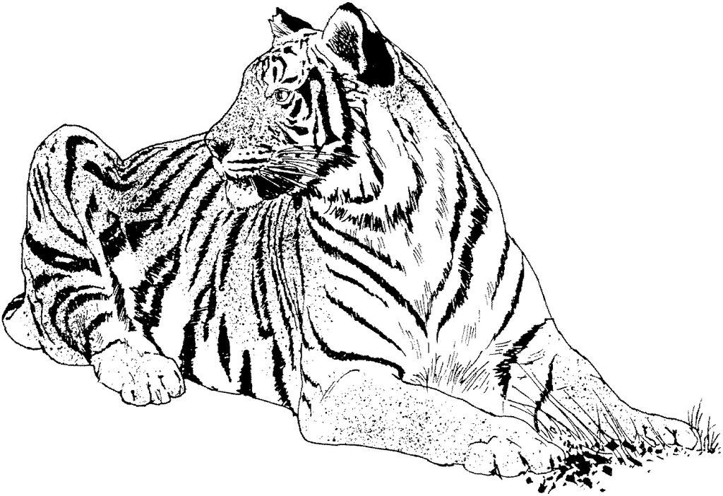 Tiger Coloring Pages Kids Drawings Free Printable Coloring Pages