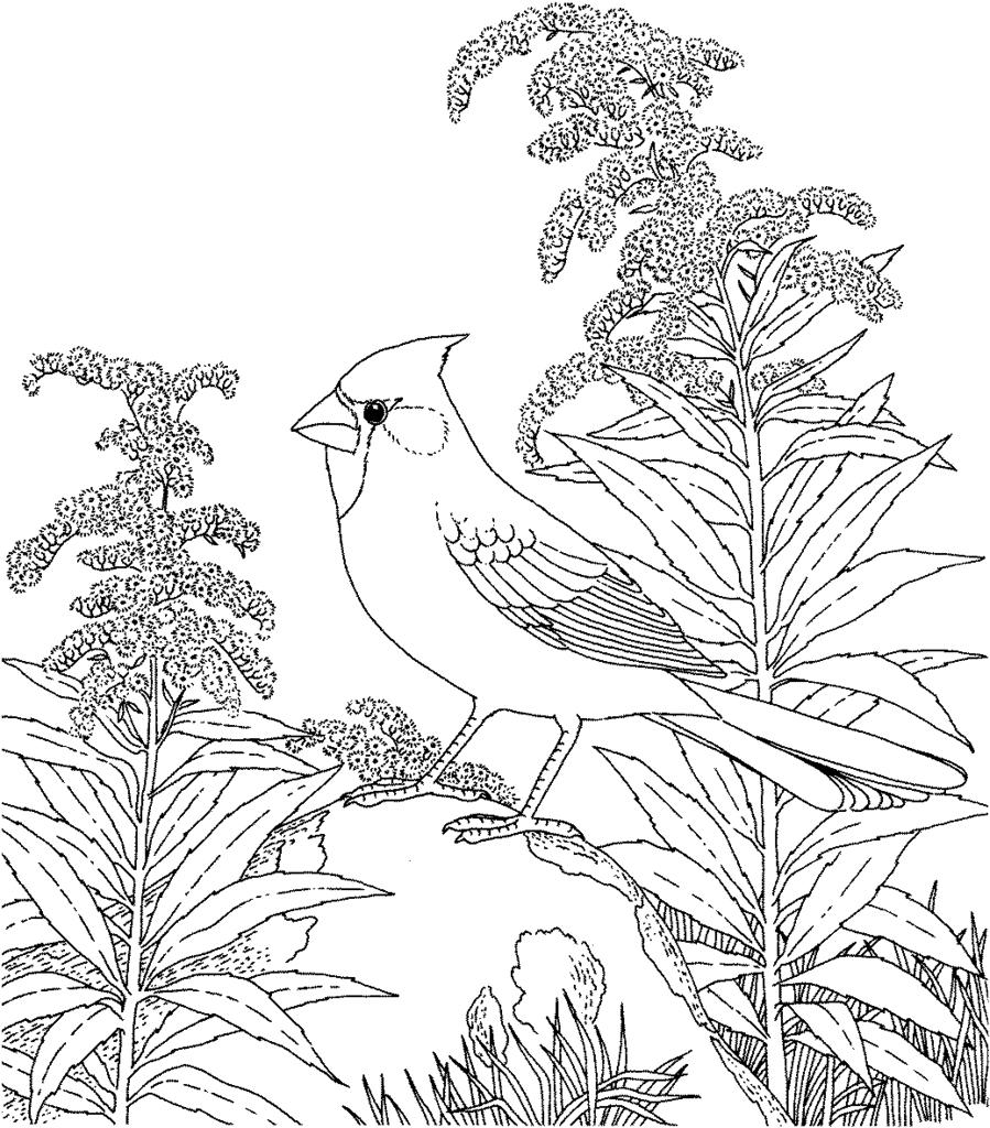 Adults Nature Coloring Pages Miracle Line Drawing - Free Printable ...