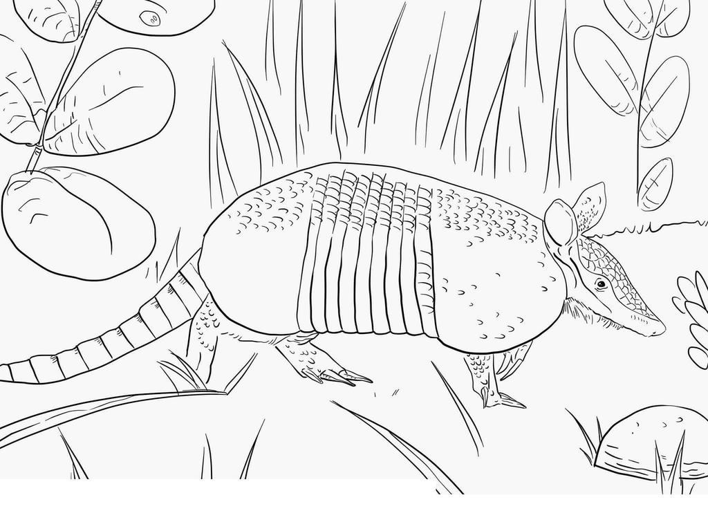 Free Armadillo Coloring Pages Awesome Nine Worksheet printable