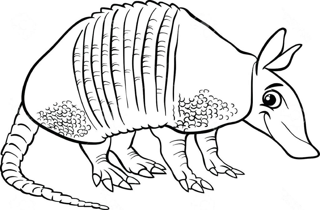 Armadillo Coloring Pages Awesome Sheet Activity Free Printable