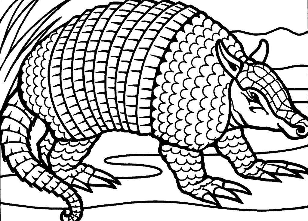 Armadillo Coloring Pages Sketch