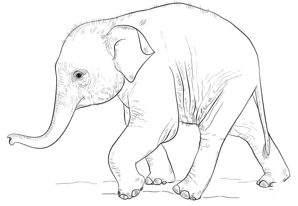 Baby Elephant Coloring Pages Adorable Colouring Free Printable