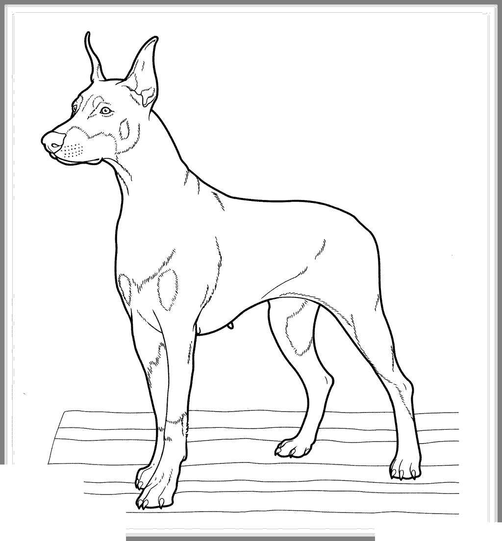 Dachshund Coloring Pages Incredible Marvelous For Toddlers Free