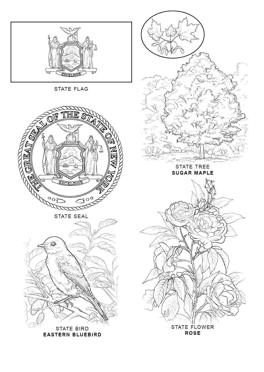 florida animals coloring pages - photo#23