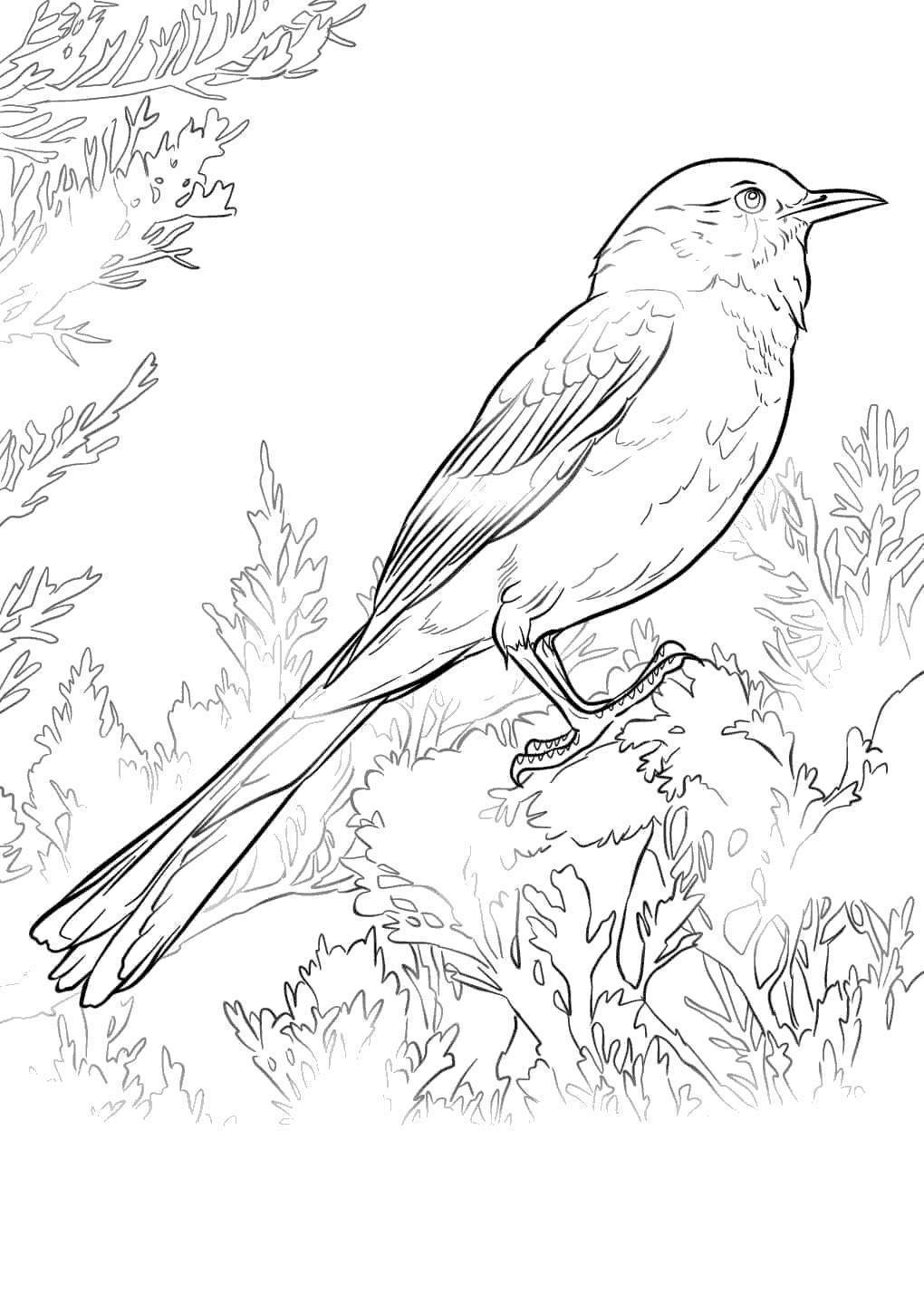 Florida State Flag Coloring Pages Bird Hand Drawing Free Printable