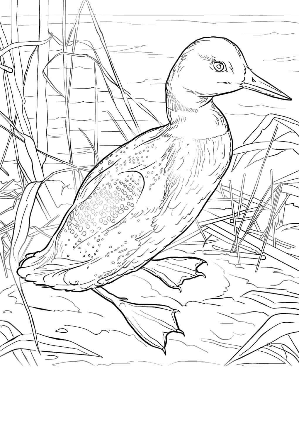 Florida State Flag Coloring Pages Bird Unique Free Printable