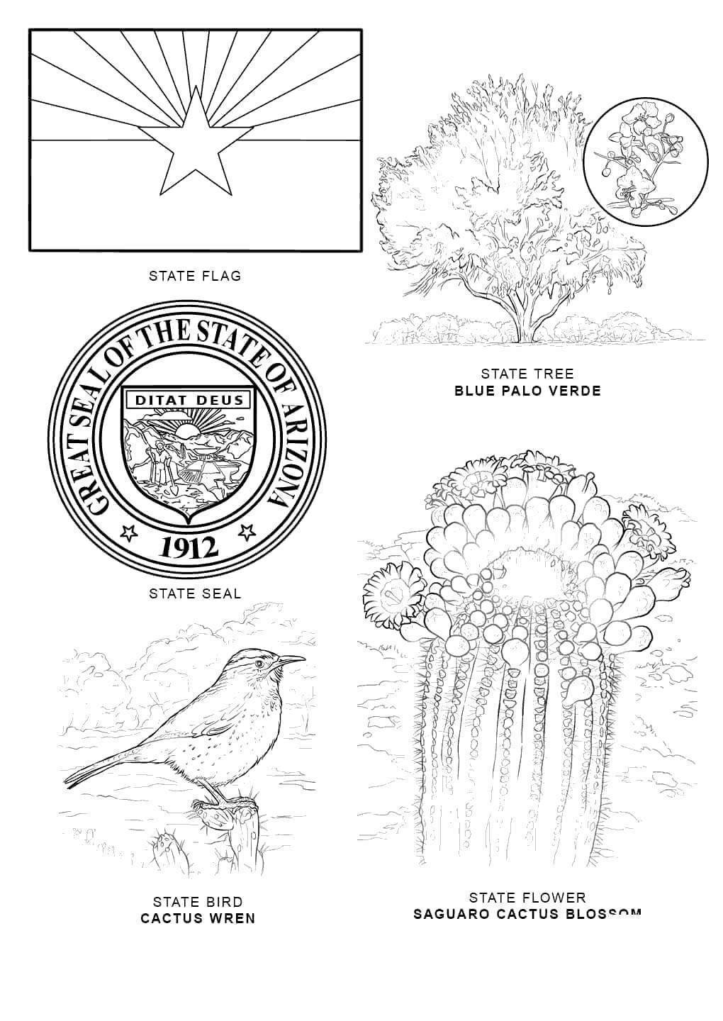 florida seal coloring pages - photo#22
