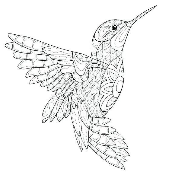 Hummingbird Coloring Pages Adult An Pictures - Free Printable ...