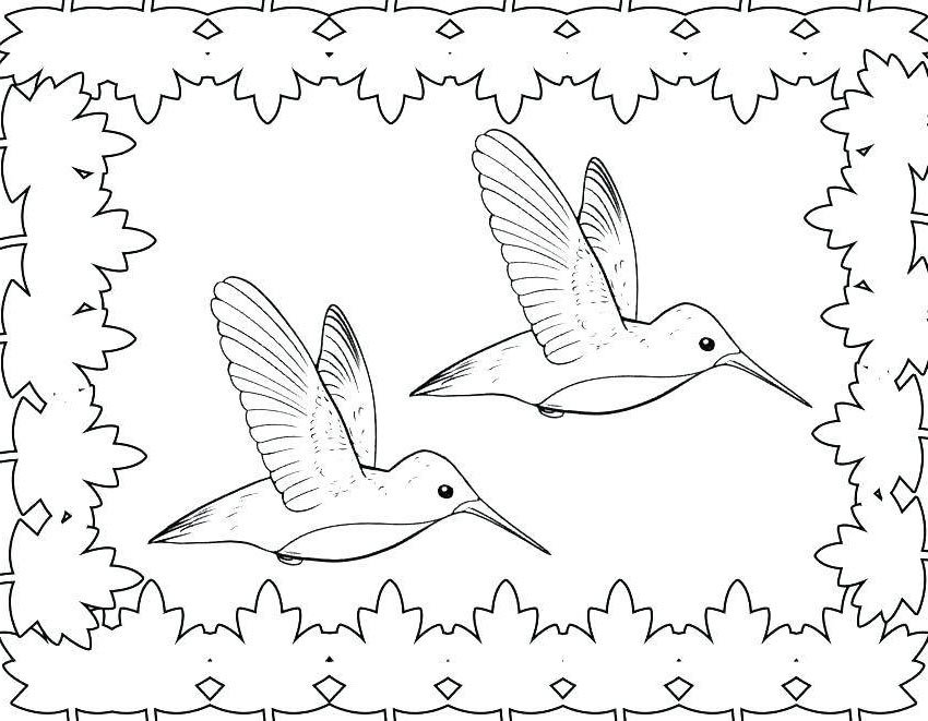 Hummingbird Coloring Pages Birds Kids for Toddlers - Free Printable ...