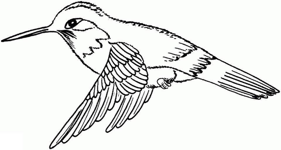 Hummingbird Coloring Pages Evering Linear - Free Printable Coloring ...