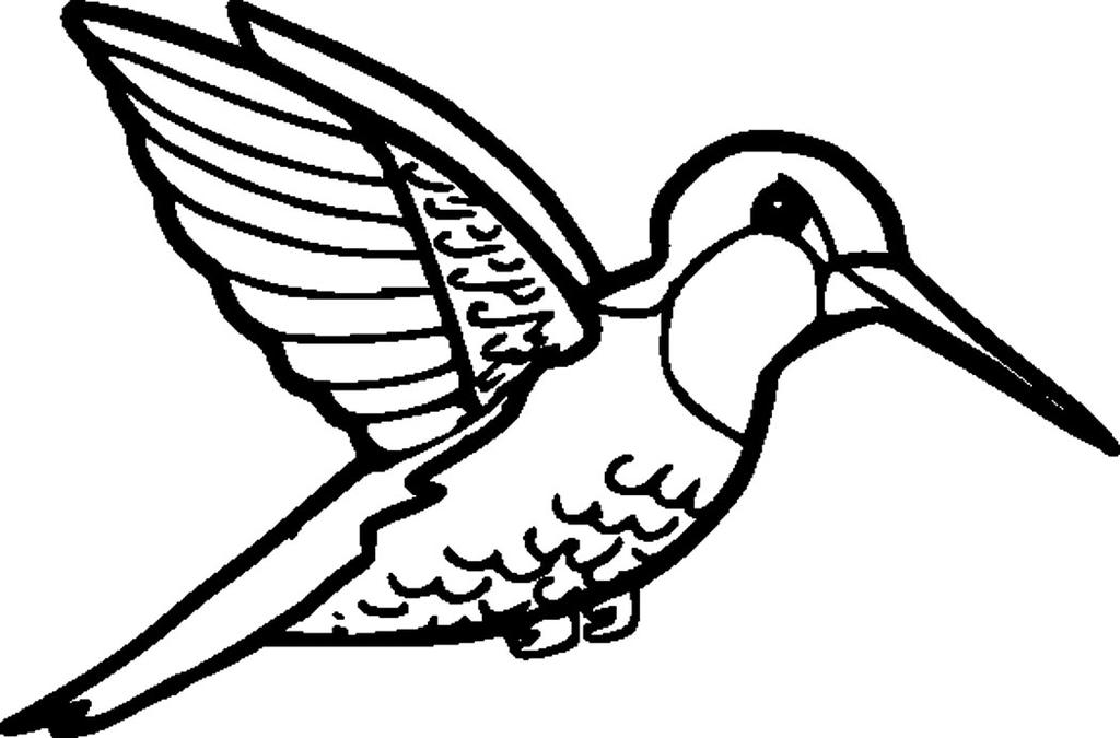 Hummingbird Coloring Pages High Quality for Kids - Free Printable ...