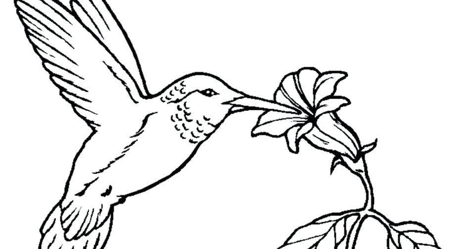 Hummingbird Coloring Pages Humming Bird Hand Drawing - Free ...