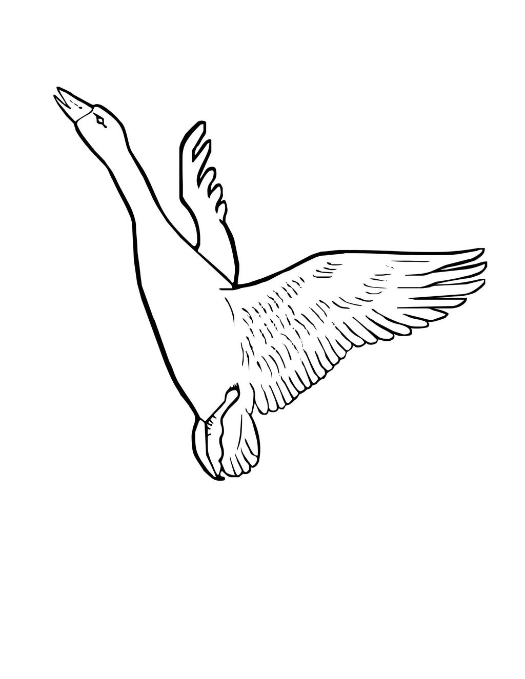 Osprey Bird Coloring Pages Hand