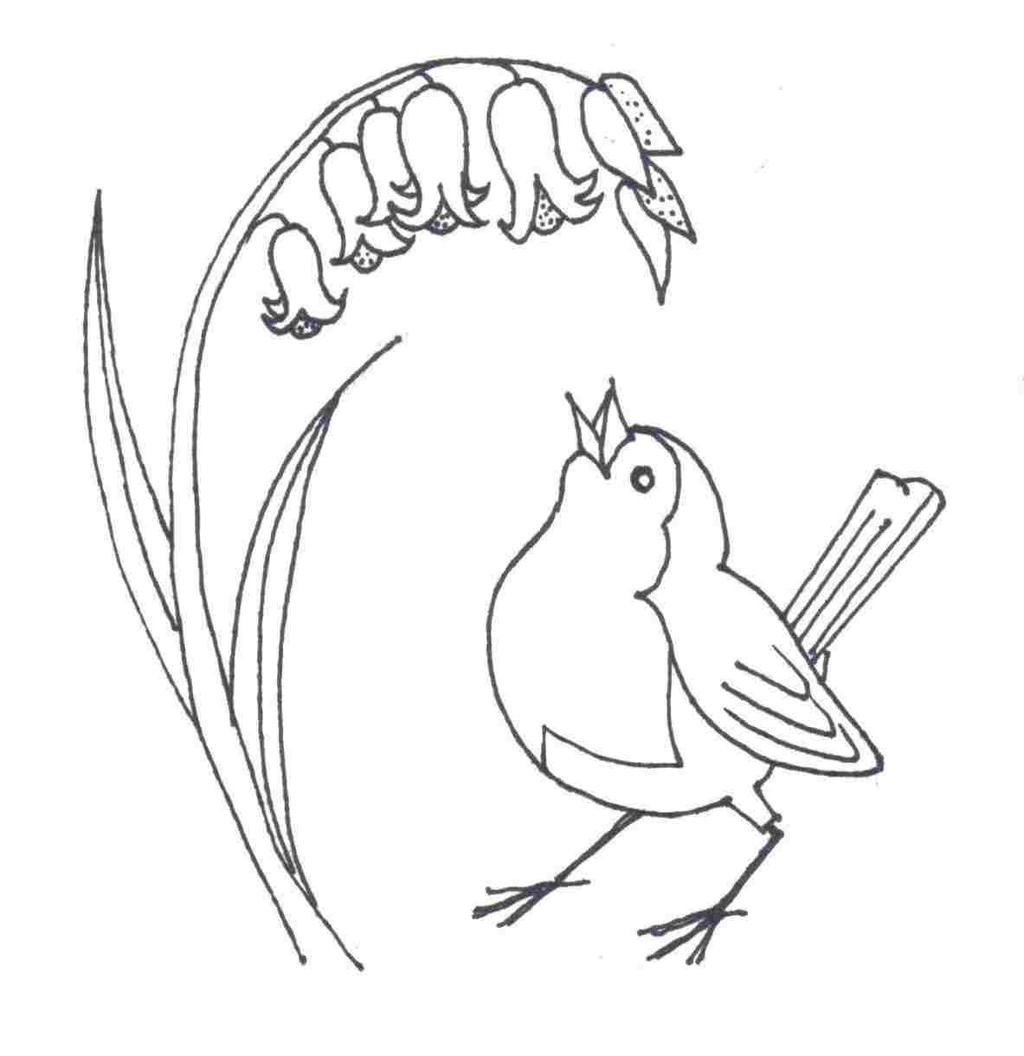 Osprey Bird Coloring Pages Kiwi