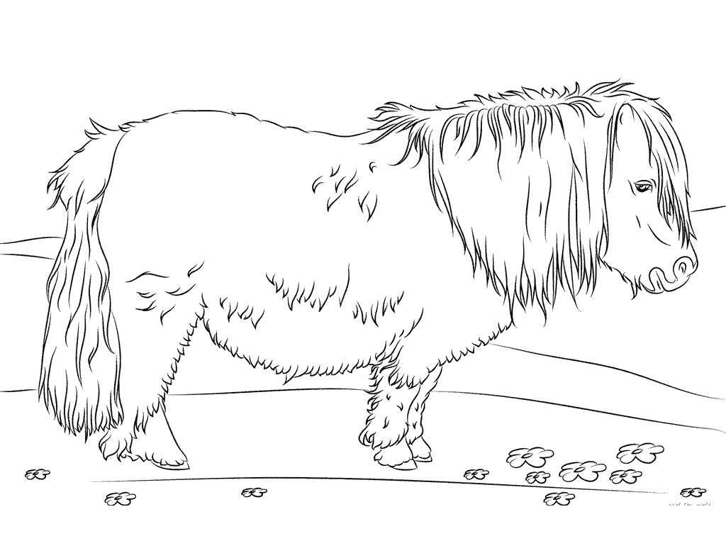 Realistic Horse Coloring Pages Horses Characters - Free ...