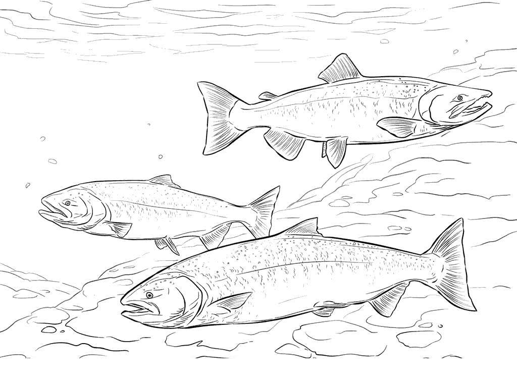 Free Salmon Coloring Pages Chinook Characters printable