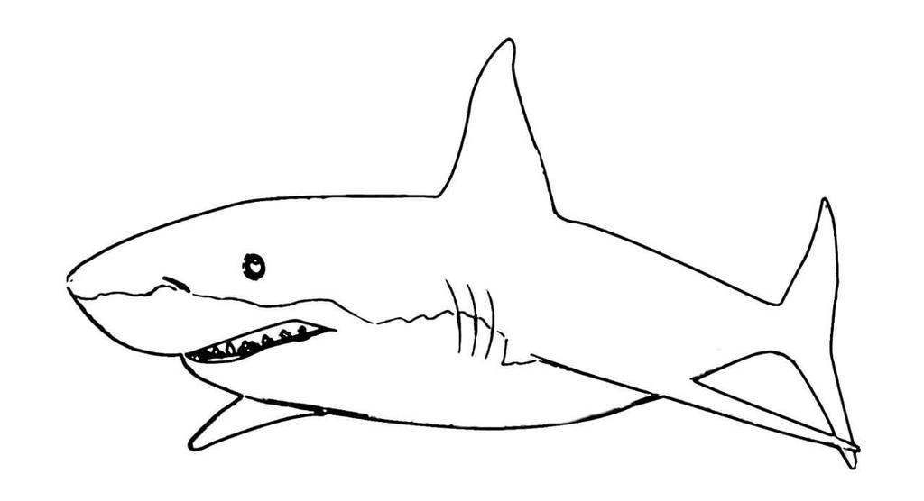 Sharks Coloring Pages Hammerhead