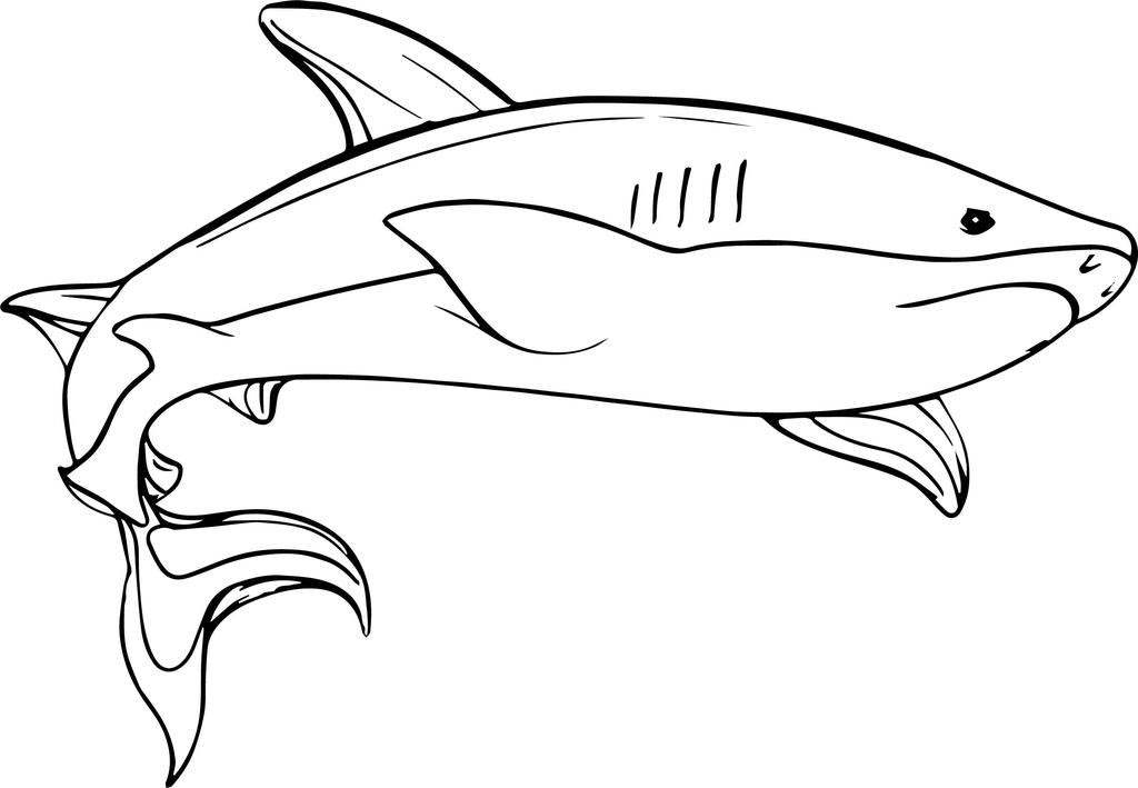 Sharks Coloring Pages Scarce Shark