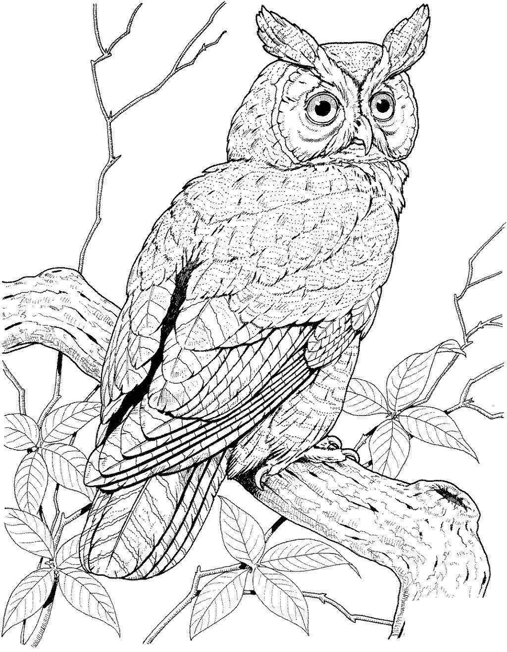 Snowy Owl Coloring Pages Owls For Kids Free Printable Coloring Pages