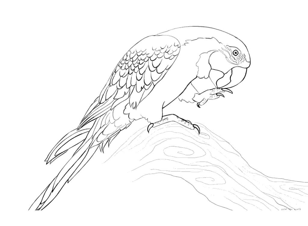 Free Blue Macaw Coloring Pages printable