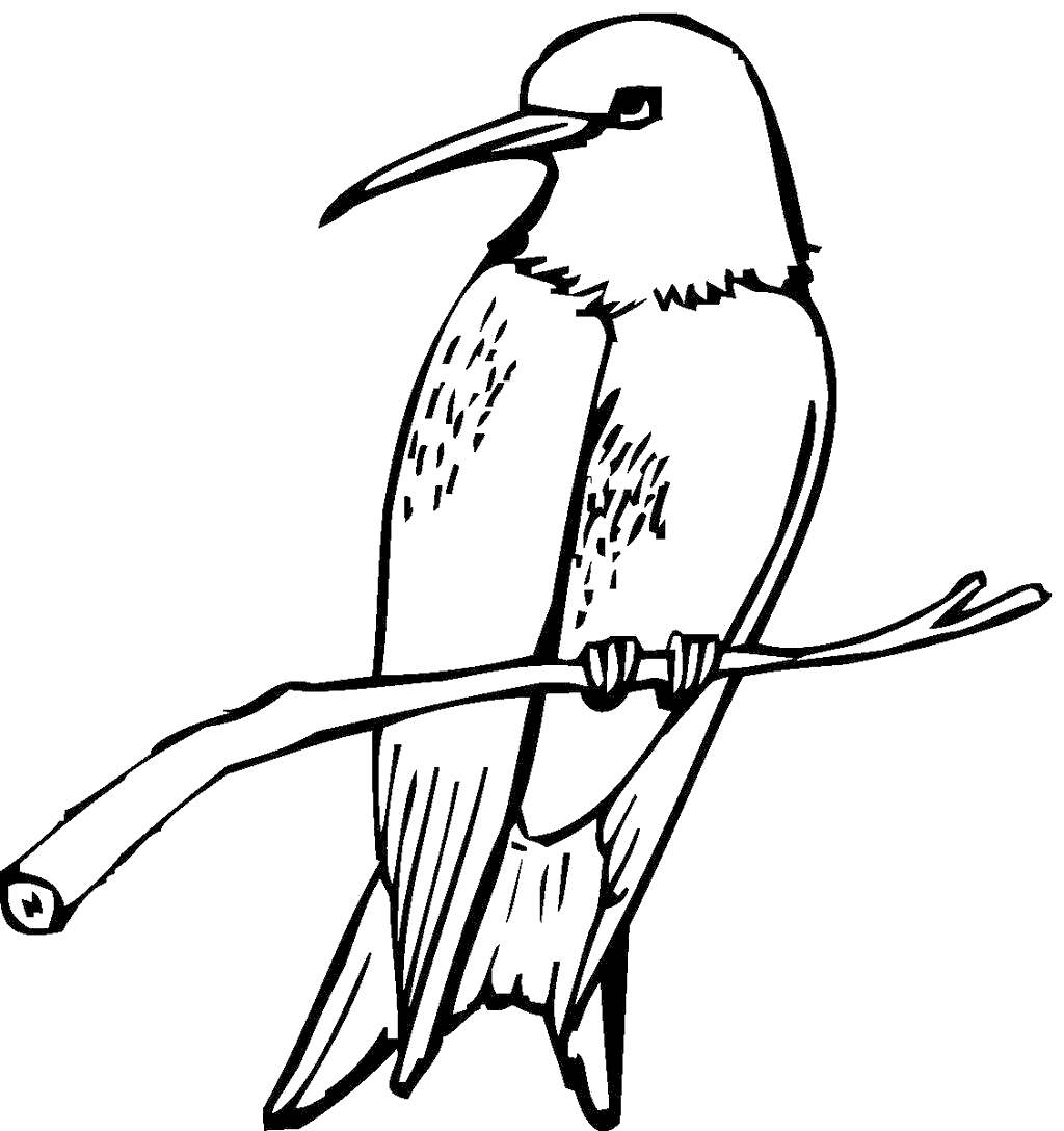Colibri Bird Coloring Pages Hummingbirds Linear - Free ...