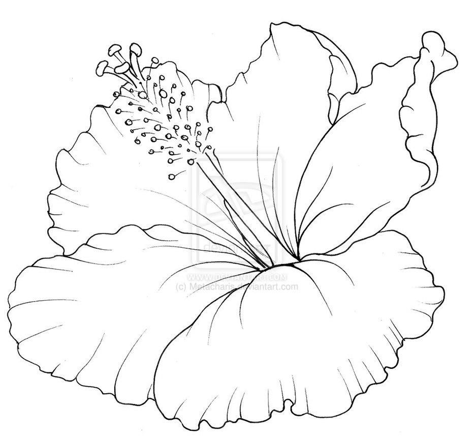 Hibiscus Flower Coloring Pages 13 Clipart - Free Printable ...